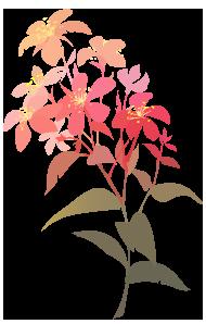 Yvonnes logo flowers